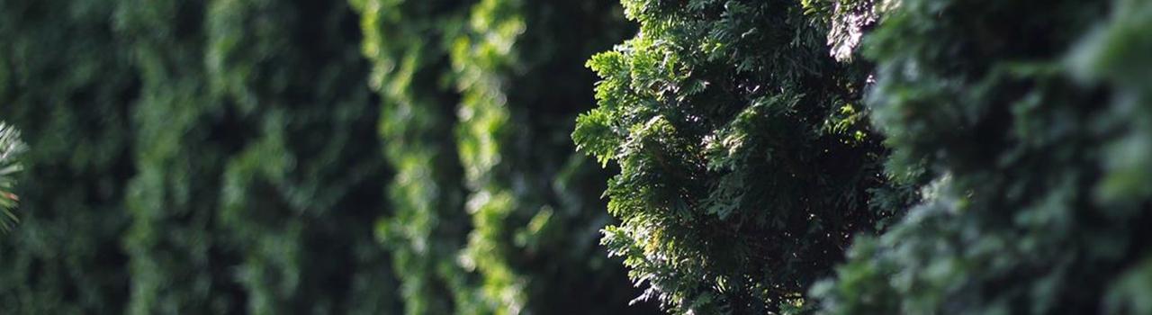 le_nostre_piante_3