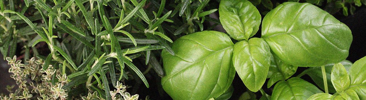 le_nostre_piante_7
