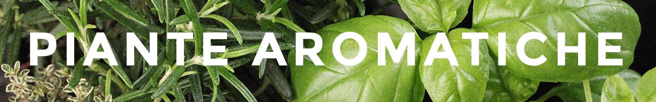 piante_aromatiche_ban